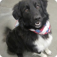 Border Collie Mix Dog for adoption in Holton, Kansas - Charley