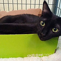 Adopt A Pet :: Kiara - South Haven, MI