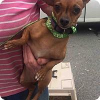 Adopt A Pet :: Princess - Loudonville, NY