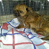 Adopt A Pet :: Frizzil - Denver, IN