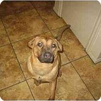 Adopt A Pet :: Kenny - Scottsdale, AZ