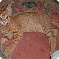 Adopt A Pet :: DURANGO - Acworth, GA