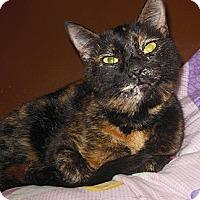 Adopt A Pet :: Monet - Phoenix, AZ