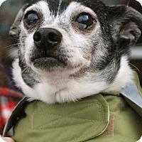 Adopt A Pet :: Bo - Homewood, AL