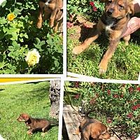 Adopt A Pet :: Luciana - Scottsdale, AZ