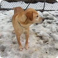Adopt A Pet :: Jackson - Shelter Island, NY