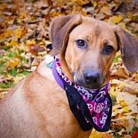 Adopt A Pet :: Stella - Princeton, KY