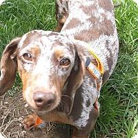 Adopt A Pet :: Savannah - Georgetown, KY