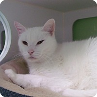 Adopt A Pet :: Ford - Muskegon, MI
