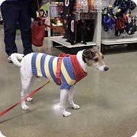 Adopt A Pet :: Buddy - Pataskala, OH