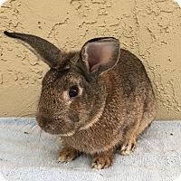 Adopt A Pet :: Raffles - Bonita, CA