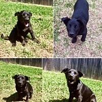 Adopt A Pet :: Mike T - Austin, TX