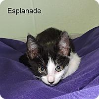 Adopt A Pet :: Esplanade - Slidell, LA