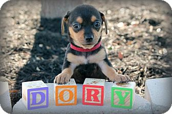 Dachshund Mix Dog for adoption in Austin, Texas - Dory