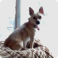 Adopt A Pet :: Kamali - Hewitt, NJ