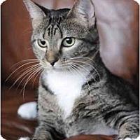 Adopt A Pet :: Chantilly - Columbus, OH