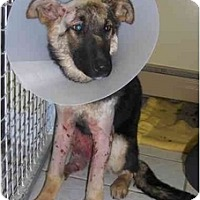 Adopt A Pet :: HELP SASHA! - Toronto/Etobicoke/GTA, ON