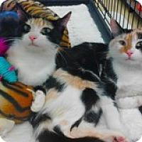Adopt A Pet :: Molly and Dolly - Atlanta, GA