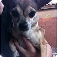 Adopt A Pet :: Bandita - Mesa, AZ