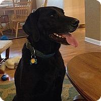 Adopt A Pet :: Drover - Evergreen, CO