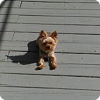 Adopt A Pet :: Noah - West Deptford, NJ