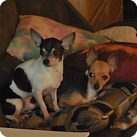Adopt A Pet :: Lance and Lilly - Ormond Beach, FL