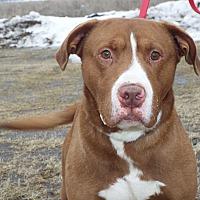 Adopt A Pet :: Zeus - Shelby, MI