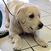 Adopt A Pet :: Champ II - BIRMINGHAM, AL