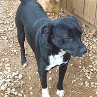 Adopt A Pet :: Spice - Ashland, AL