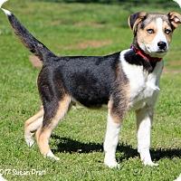 Adopt A Pet :: Glacier - Bedford, VA
