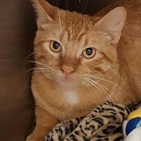 Adopt A Pet :: Jack - Lago Vista, TX