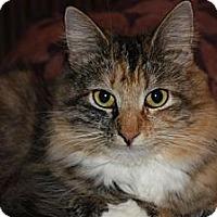 Adopt A Pet :: Hartley (LE) - Little Falls, NJ