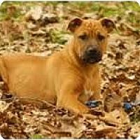 Adopt A Pet :: Prancer - Staunton, VA