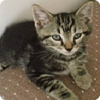 Adopt A Pet :: Oreo - Ft. Lauderdale, FL