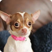 Adopt A Pet :: Sammi (Bonded with Rambo) - Romeoville, IL