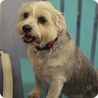 Adopt A Pet :: Ty and Lila - Jupiter, FL