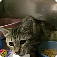 Adopt A Pet :: Arabella - Byron Center, MI