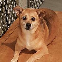 Adopt A Pet :: Brown Dog - Lexington, KY