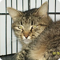 Adopt A Pet :: Miss Kitty - Mexia, TX