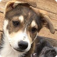 Adopt A Pet :: Sitka - Poway, CA