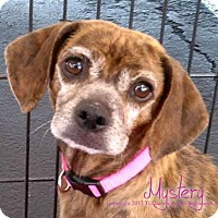 Adopt A Pet :: Mystery - Simi Valley, CA