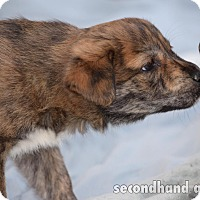 Adopt A Pet :: Elsie - Rosamond, CA