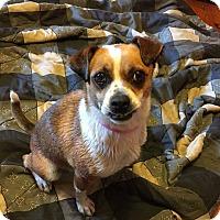 Adopt A Pet :: Katie - Bardonia, NY