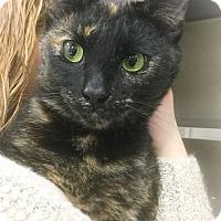 Adopt A Pet :: Belize - Webster, MA