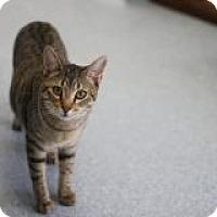 Adopt A Pet :: Miri - El Cajon, CA