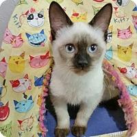 Adopt A Pet :: Leah - Davis, CA