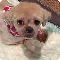 Adopt A Pet :: Mika - Homer Glen, IL