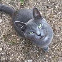 Adopt A Pet :: Lucy - Sedalia, MO