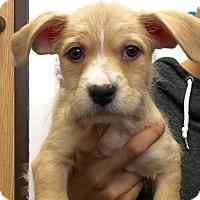 Adopt A Pet :: Euro CL - Schertz, TX