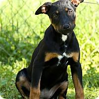 Adopt A Pet :: Chase - Auburn, CA